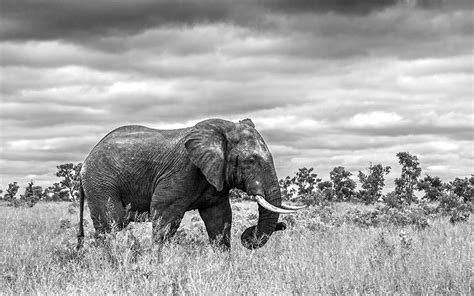 Arrest of Key Ivory and Rhino Horn Trafficker Signals a ...