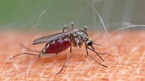 20 Schön Hausmittel Gegen Kleine Mücken In Der Küche