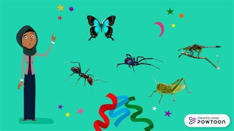 Organ Gerak Hewan Vertebrata dan Invertebrata - YouTube
