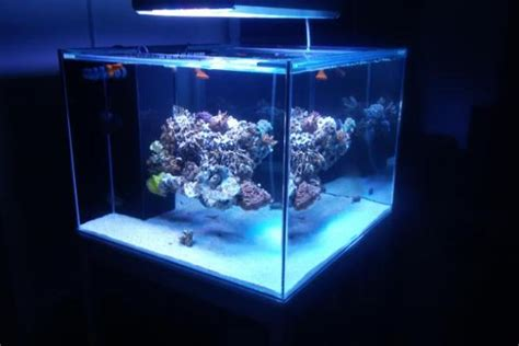 Cube Aquarium Aquascape by 60g Cube Rimless Build With Floating Aquascape Reef2reef