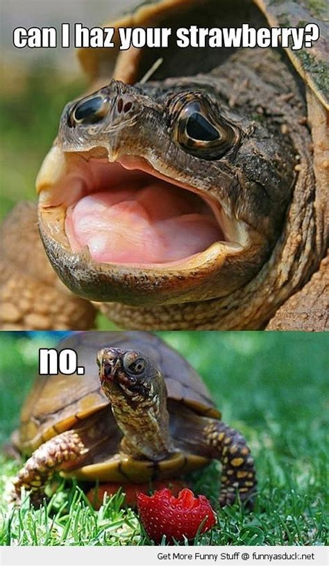 Funny Turtle Memes - 27 best images about turtle memes on pinterest military humor saturday morning and turtle