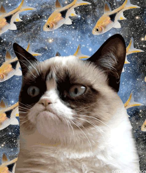 animated gifs  cats floating  galaxies