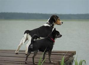 Vermieter Verbietet Hund : ferienwohnung born f r 2 personen piratennest darss mit ~ Lizthompson.info Haus und Dekorationen