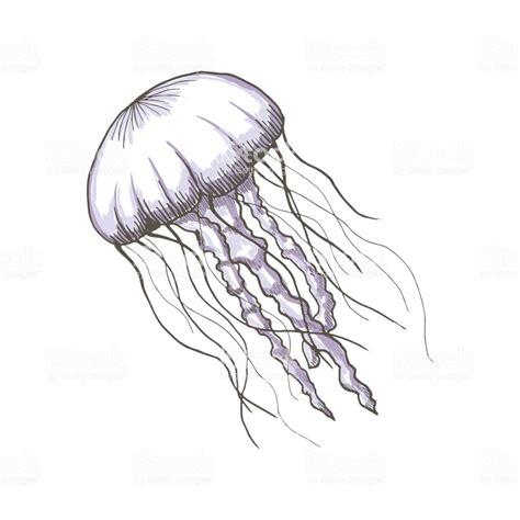 Jellyfish Drawing Ecosia