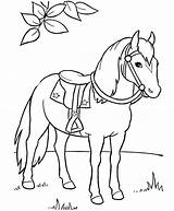Clydesdale Coloring Pages Horse Printable Getcolorings sketch template