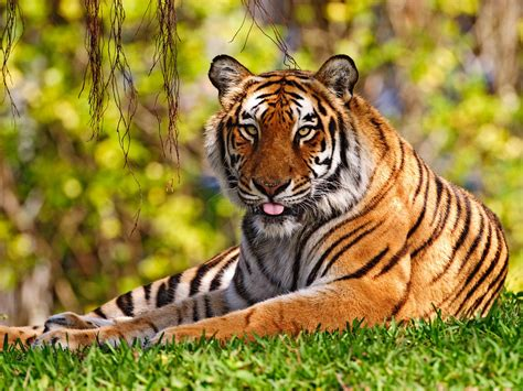 Top 10 Beautiful Animal Wallpapers - pictures top 10 tiger tiger wallpaper top ten animal