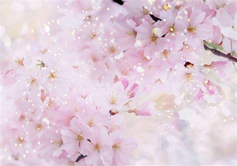 桜 画像 素材 無料 イラスト に対する画像結果