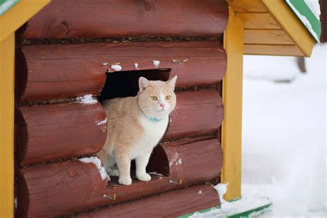 The Cat House by Heated Cat House Why It S Necessary How To Build Your
