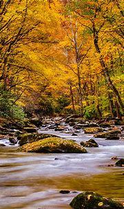 Beautiful Nature Wallpaper For Mobile Nature Picture of ...