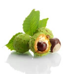 Gallery For > Chestnut Seed