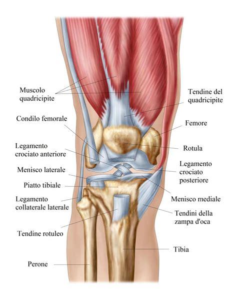 Dolori Ginocchio Interno - distorsione menisco e dei legamenti ginocchio tempi