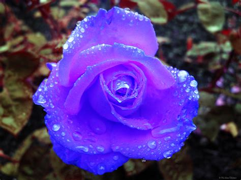 Résultat d'images pour joli fleurs