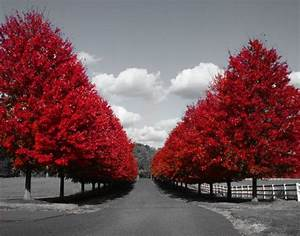 Black white red tree line road photography wall art