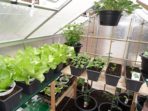 was kann in ein gewächshaus pflanzen regaltr 228 ger f 252 r im gew 228 chshaus passend f 252 r alle g 228 ngigen marken