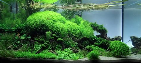 Aquascaping Planted Tank by Jan Simon Knispel And Aquascaping Aqua Rebell
