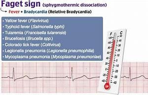 Cardio - Bradycardia   Fever   Faget Sign