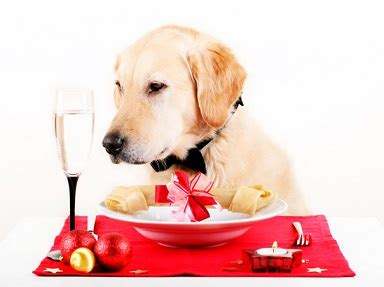 dog food analysis  golden retriever dogs