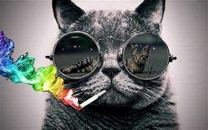 Cat Sunglasses Photoshop Cool Glasses Wallpapers Them