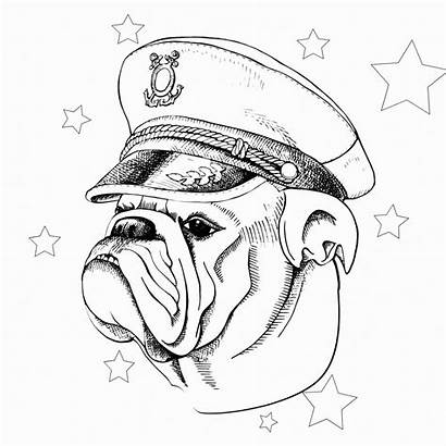 Bulldog Coloring Adults Bulldogs Colouring American Printable
