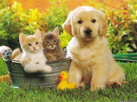 Summer Animal Wallpaper - summer animals pics desktop wallpapers 187 animals