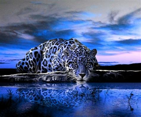 coolest jaguar cat blue jaguar animal blue jaguar animals animal hd