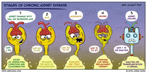 CKD Chronic Kidney Disease Stages