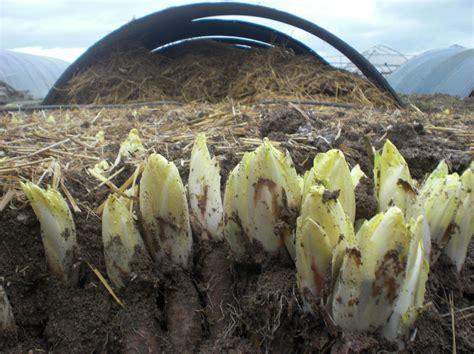 cuisiner des endives le palais fermier à grange l 39 évêque vente de paniers de