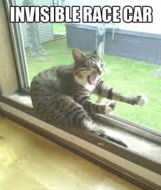 cat racing cat invisible race car jokes memes pictures