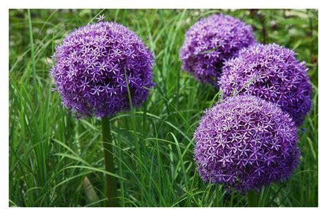 Rote Pilze Im Garten by Flechten Am Holunderstrauch Foto Bild Pflanzen Pilze
