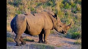 African Wildlife Slide Show - Photos Of Africa
