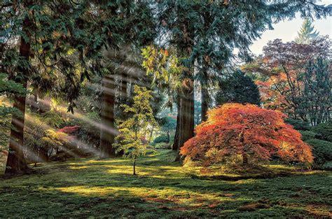 garden trees maple leaves sun rays park morning