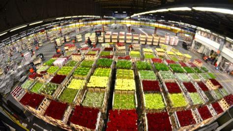 mercato dei fiori napoli cosa vedere in olanda floraholland l asta dei fiori
