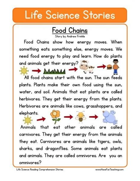 images  animal food chains  pinterest student
