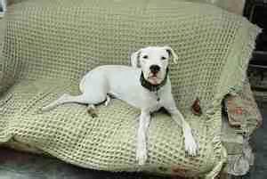 comment empecher chien de monter sur le canap empecher un chien de monter sur le canape 28 images