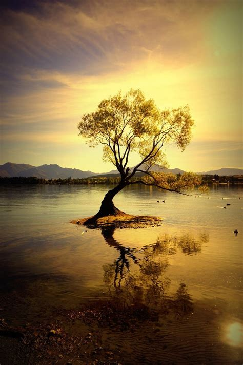 121 Best Images About #thatwanakatree  Wanaka Willow On