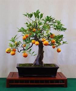 Wunderschone bonsai baum kompositionen archzinenet for Whirlpool garten mit bonsai wo kaufen