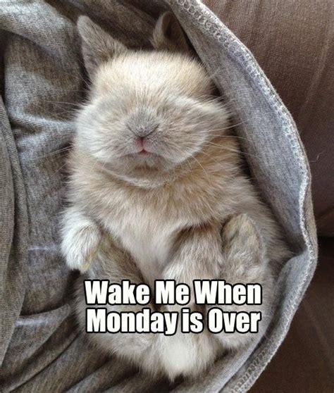Bunny Memes - rabbit ramblings monday bunny meme day over it