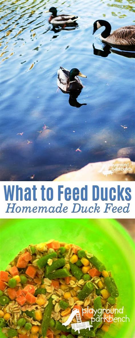 best 25 what to feed ducks ideas on pinterest how to