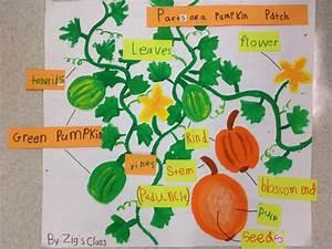 Parts Of A Pumpkin Patch