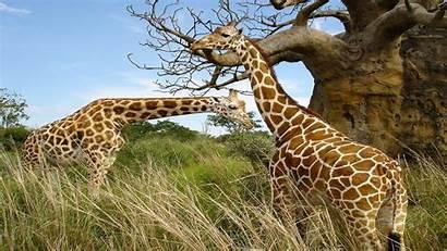 Wildlife Desktop Wallpapers Resolution