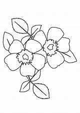 Rose Coloring Pages Wild Prairie Flowers Printable Preschoolers Parentune Worksheets sketch template