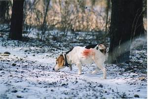 Beagle Rabbit