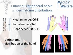 Hand Dermatomes Related Keywords - Hand Dermatomes Long ...