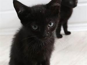 Non vengono bene nelle fotografie : boom di abbandoni dei gatti neri Corriere it