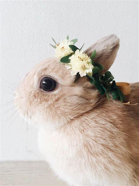 pin  maddi jones   pet bunny rabbits rabbit