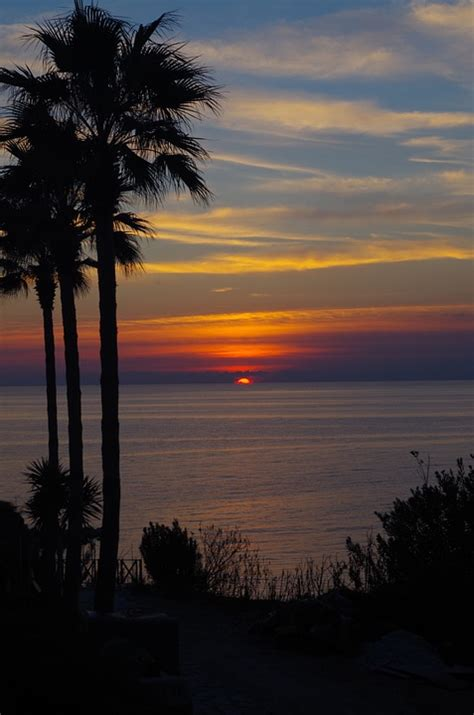 photo sunset palm trees mood sea sun