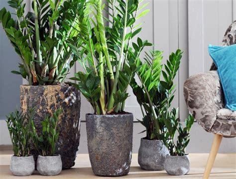 fleurs en pot interieur comment entretenir les plantes vertes