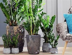 Pot Fleur Interieur : comment entretenir les plantes vertes ~ Teatrodelosmanantiales.com Idées de Décoration