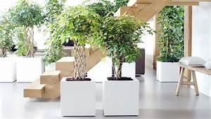 Porte Plante Interieur Design : purifier son int rieur gr ce aux plantes spread the truth ~ Teatrodelosmanantiales.com Idées de Décoration