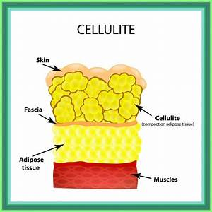 Fat Cell Structure Vector Illustration  Labeled Anatomical